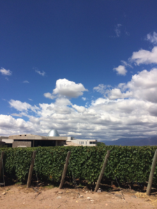 The MWs visited Zuccardi Wines in Paraje Altamira